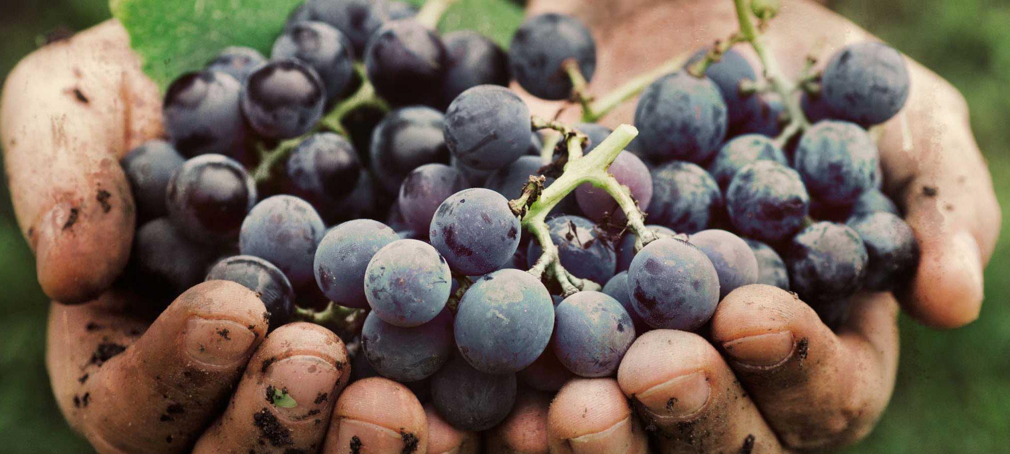 Oktober: Weinfest in Valtice